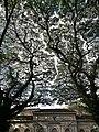 Ancient Trees.jpg