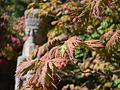 Anderson Japanese Gardens Rockford Illinois - Japanese Maple Leaves.jpg