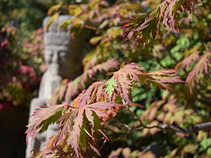 Anderson Japanese Gardens - Japanese Maple Leaves with statue in background taken at Anderson Japanese Gardens in October 2015