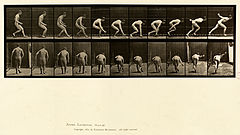 Animal locomotion. Plate 287 (Boston Public Library).jpg