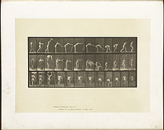 Animal locomotion. Plate 439 (Boston Public Library).jpg