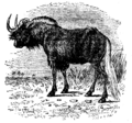 Antelope 6.png