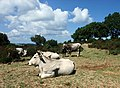 Apulia-Landscape03.jpg