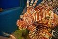 Aquarium, Kyoto University, Shirahama, Japan (476710430).jpg
