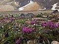 Aragats crater 35.jpg