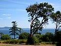Arbutus Cove Park - panoramio.jpg