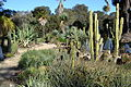 Arizona Cactus Garden at Stanford University 6.JPG