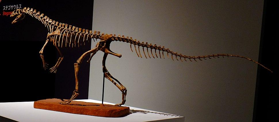 Asilisaurus kongwe