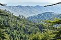 Atlas Cedar Forest in Mount Chelia.jpg