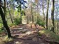 Auf dem Hirschberg bei Kirkel 2010-04-21.JPG
