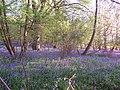 Austey Wood near Henley-in- Arden Warwickshire - geograph.org.uk - 427528.jpg