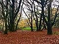 Autumn Woodland (geograph 5967834).jpg