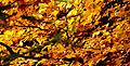 Autumn colours (3030599812).jpg