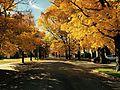 Autumn in Northwest Austin.jpg