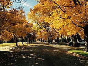 Autunno wikipedia for Foto per desktop gratis autunno