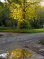 Autumnal Puddles at the Intersection near Welford - geograph.org.uk - 74100.jpg