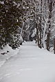 Babcock-winter-snow-trail-pub - West Virginia - ForestWander.jpg