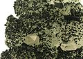 Babingtonite-Prehnite-bab03d.jpg