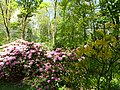 Bad Sassendorf – Kurpark - Rhododendronpark am 6. Mai 2016 - panoramio - Edgar El (5).jpg