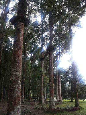 Adventure park - Treetop Adventure Park in Bali