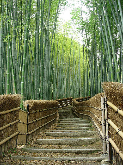 Bamboo Trees at the Adashino-nenbutsuji Temple