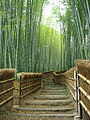 Bamboo Trees at the Adashino-nenbutsuji Temple.jpg