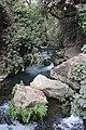 Banias river (7).jpg