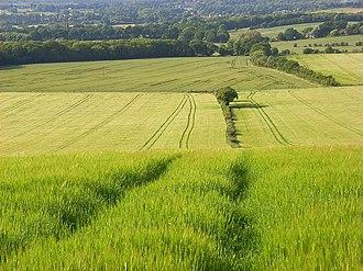 Wanborough, Surrey - Image: Barley, Wanborough geograph.org.uk 858249
