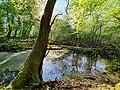 Barn Coppice, Graylands Horsham. Pond 02.jpg