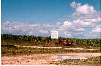 Batey (sugar workers' town) - Canefields beside a batey near Ingenio Consuelo, Dominican Republic.