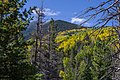 Bear Jaw Trail No. 26 (29861282811).jpg