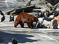 Bear Mtn Zoo.JPG