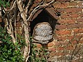 Bee Boles on Cottage behind Quebec House - geograph.org.uk - 1296874.jpg
