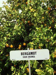 arbre bergamotier feuilles et fruits