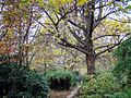 Berlin Tiergarten Herbst.jpg
