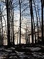 Berngat im Plättelenwald 2.JPG