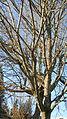 Big giant tree.jpg