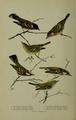 Bird-Lore-6-5 0184.png