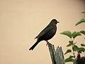 Bird silhouette (14678346745).jpg