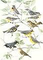 Birds of America; (1923) (19761749724).jpg