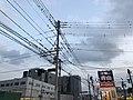 Birds on cables at dusk.jpg