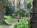 Birks Wood, Oughtibridge - geograph.org.uk - 1282343.jpg