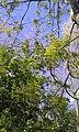 Birmingham, UK - panoramio (12).jpg