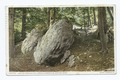 Bit of Hemlock Hill, Arnold Arboretum, Boston, Mass (NYPL b12647398-69918).tiff