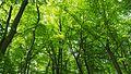 Blätterdach.jpg