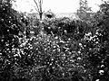 Black & white Greenery.jpg