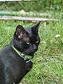 Black cat head in Billom 02.jpg