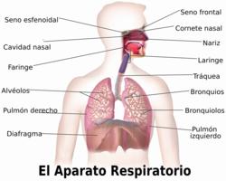 Aparato Respiratorio Vikidia