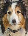 Bodie's Eyes 7-14 (15846583255).jpg