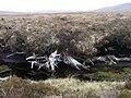 Bog Oak Exposed in Allt a' Choire Bhuidhe - geograph.org.uk - 814733.jpg